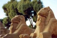 Sunweb Vliegreizen Sharm el Sheikh